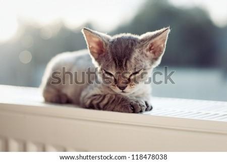Little sleepy kitten lying on radiator - stock photo