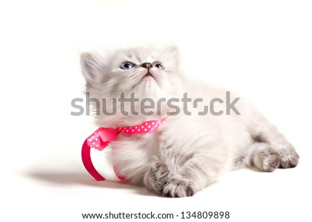 little smoky furry kitten with pink bow lying and looking up isolated on white - stock photo
