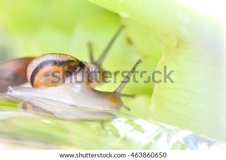 Little Snail Climbing on Flowers Soft Focus