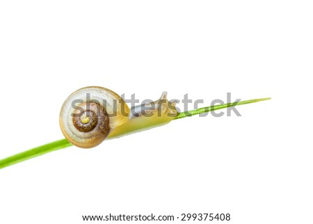 Little snail climbing upwards - stock photo