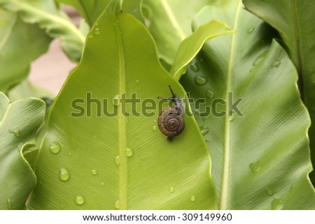 little snail move on green leaf - stock photo