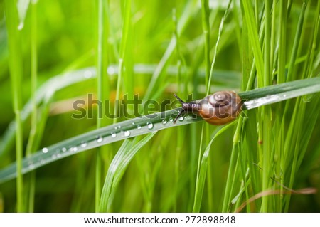 Little snail on wet fresh leaf with green grass background, selective focus - stock photo
