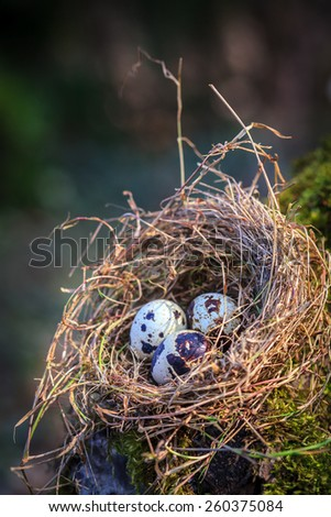 Little spotted eggs in straw nest on moss tree - stock photo