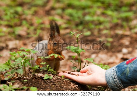 Little squirrel taking nuts from human hand in park