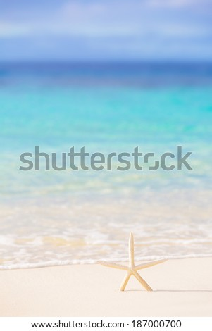Little starfish on the beach, beautiful marine background, beauty of sea nature, sunny day, relaxation on seashore, summer vacation concept - stock photo