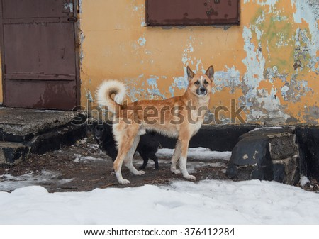 Little stray dog hiding behind the big meeting with the stranger. Animals