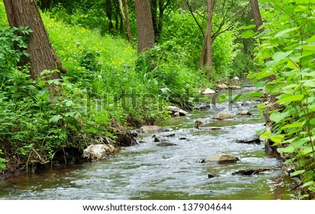 Little stream in the forest - stock photo