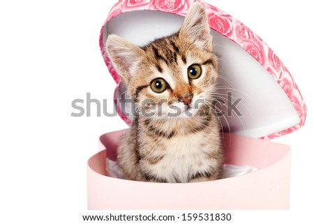 Little striped kitten sitting in a gift box in the shape of heart