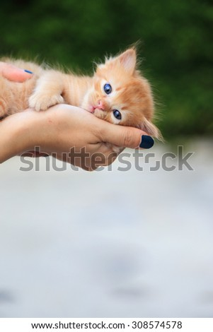 Little tabby cat in hands. - stock photo