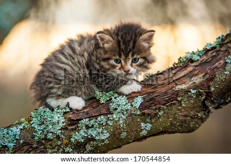 Little tabby kitten sitting on the tree - stock photo
