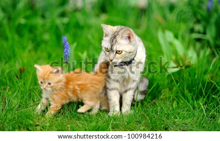 little tabby kitten with mother cat on green grass