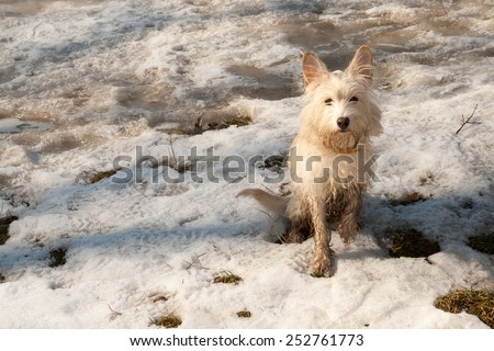 Little terrier dog on the snow