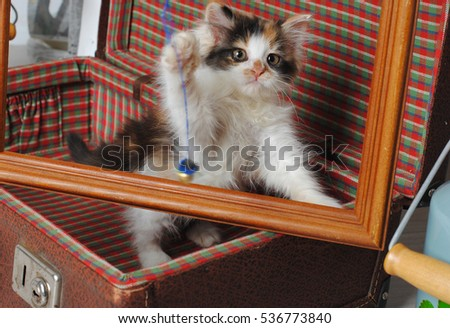 Little three-colored kitten in a retro suitcase playing with photo frame and toy