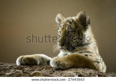 Little tiger - stock photo
