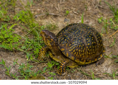 Little Tortoise - stock photo