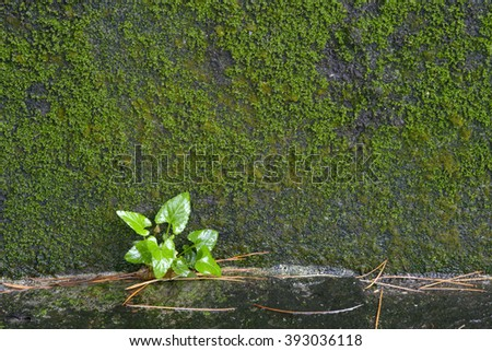 little tree and moss  are growing on old stone wall - stock photo