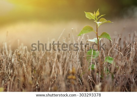 Little tree on dead trees, hope at sunset - stock photo