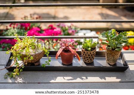 little tree pots on the balcony - stock photo