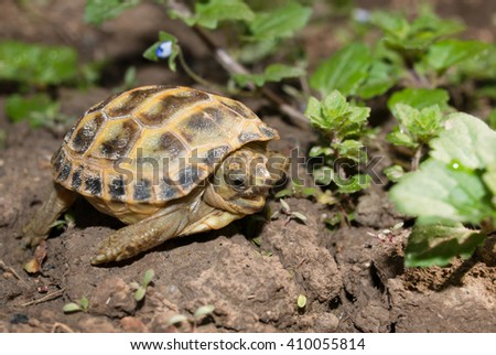 little turtle on the grass