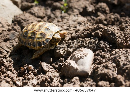 little turtle on the ground