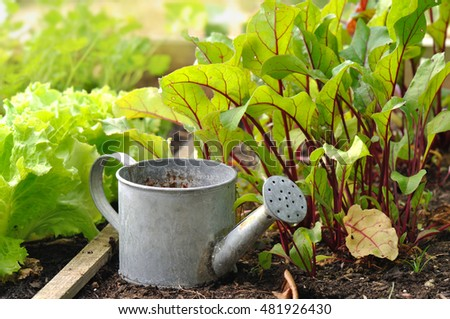 little watering can among seedling in a patch