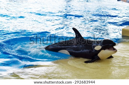 Little whale in the pool (focus on the fin) - stock photo
