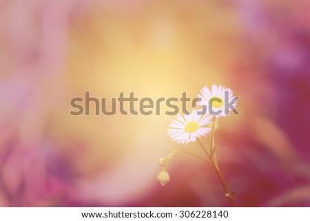 Little white daisy flower and grass beautiful vintage gradient background - stock photo
