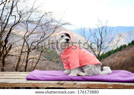 little white dog resting on a mountain top