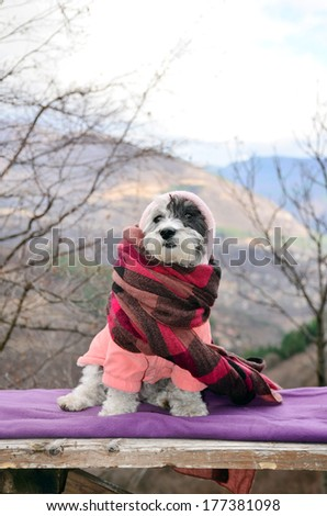 little white dog wrapped in a blanket resting on a mountain top - stock photo