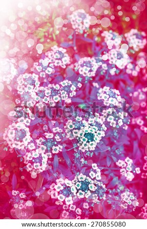 Little white flowers made with color filters, floral background. Spring background, - stock photo
