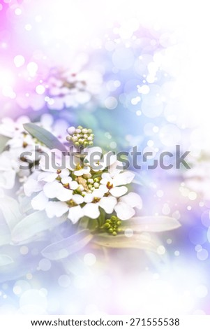 Little white flowers made with color filters, floral background. Spring background - stock photo