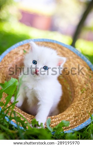 Little white kitten in a hat on the grass - stock photo