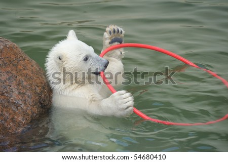Little white polar bear playing in water - stock photo