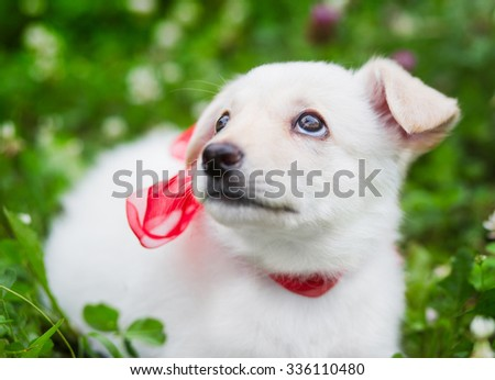 little white puppy - stock photo