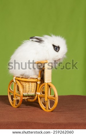 little white  rabbit  on a bicycle  - stock photo