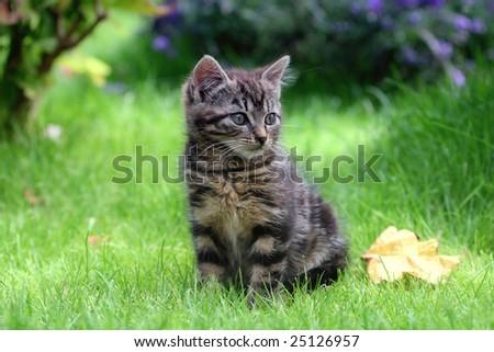 Little wild cat - stock photo