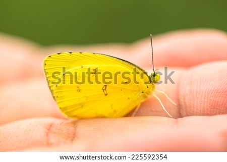 Little yellow butterfly on soft hand - stock photo
