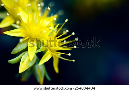 little yellow flowers close up - stock photo