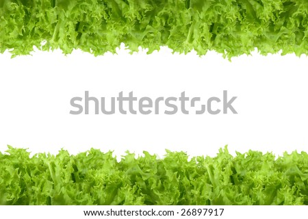 Littuce on white background