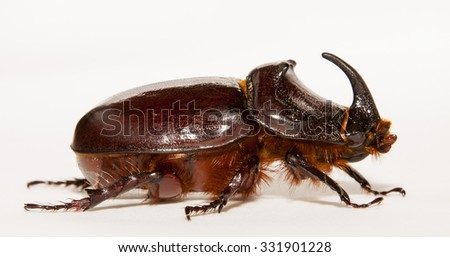 live bug a rhinoceros, shooting in a photographic studio
