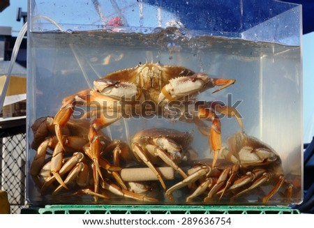 Live Crab for Sale. Fresh, live crab for sale off a crab boat at Fisherman's Wharf.  - stock photo