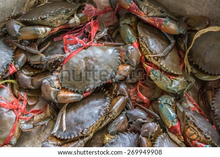 Live Crabs - stock photo