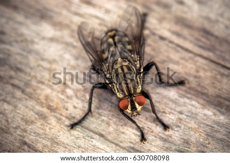 stunning live house fly on wooden background with cuisine fly 3d. Black Bedroom Furniture Sets. Home Design Ideas