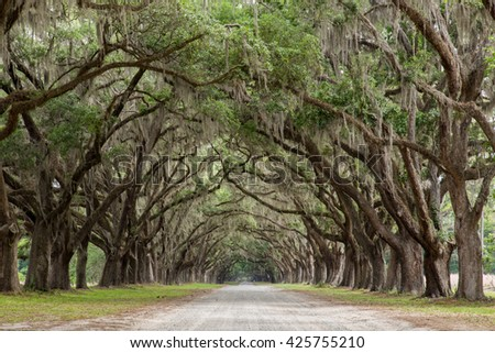 Live Oak Avenue - stock photo