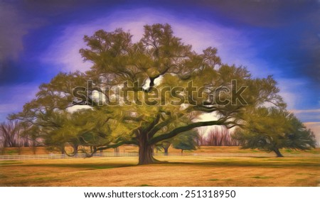 Live Oak Trees in the Southern United States - stock photo