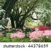 Live oaks and wild azaleas - stock photo