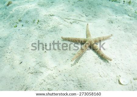 Live starfish underwater. - stock photo