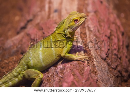 live wild reptiles lizards shot close-up in nature