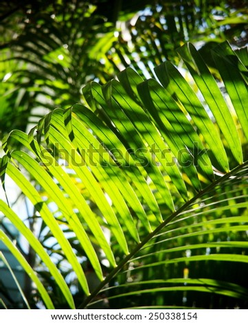 lively beautiful green palm tree leaves on a sunny day with blur leaves in depth of field and bright blue sky background - stock photo