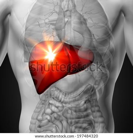 Liver - Male anatomy of human organs - x-ray view - stock photo